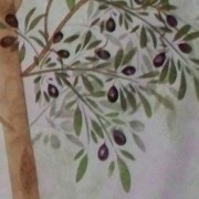 Olive-Tree-Close