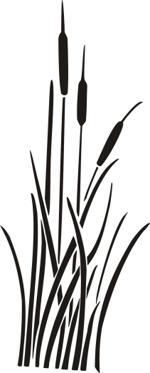 Bamboo Illustration Pattern