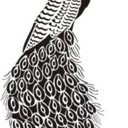 stencil-peacock-bw-525