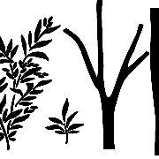 Sapling Tree BW