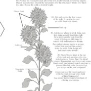 Freestyle Sunflower Instructions
